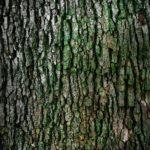 Prześliczny i {czysty zieleniec to nie lada wyzwanie, szczególnie jak jego konserwacją zajmujemy się sami.